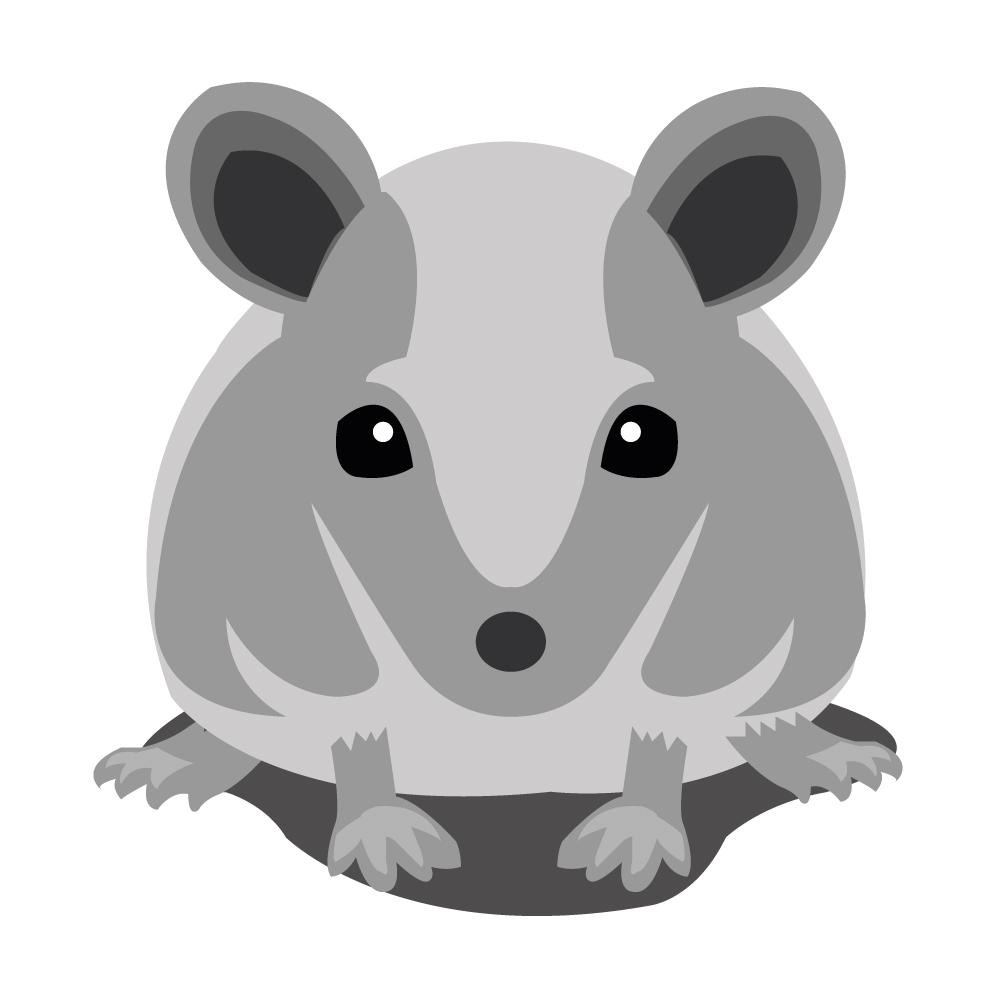 Mäuse bekämpfen - Fachgerechte Umsiedlung und Entfernung von Mäusen
