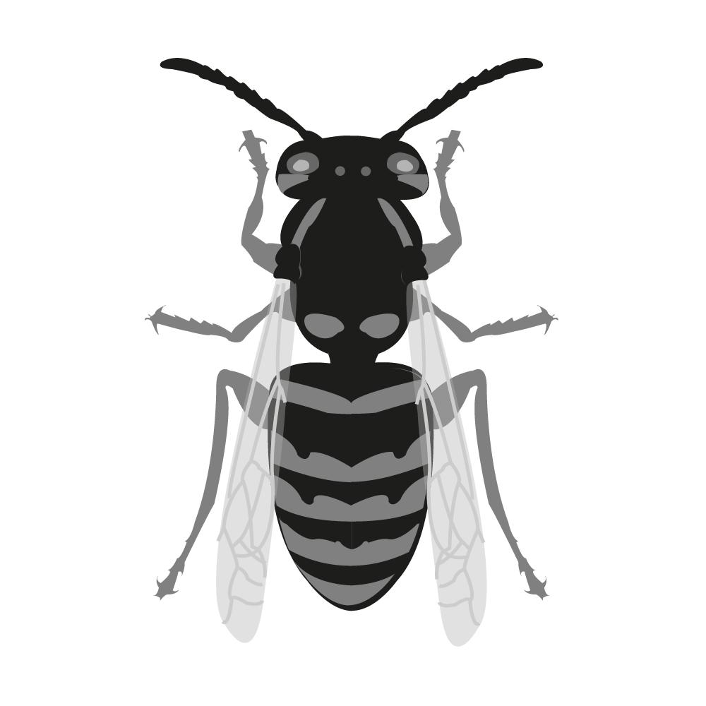 Wespenbekämpfung - Fachgerechte Umsiedlung und Entfernung von Wespennestern